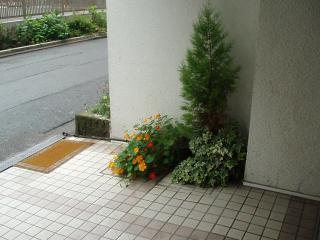 070629-otya-igeta-teifd-010.jpg